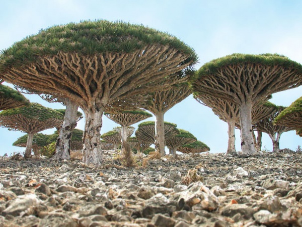 Острів Сокотра, Ємен